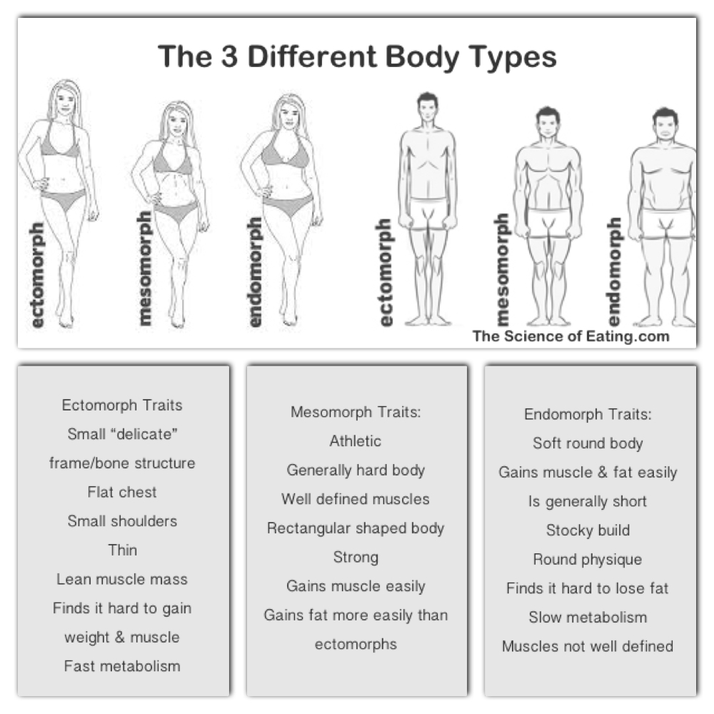 long fat protein carb diagram diet and exercise plan for your body type diet plan  diet and exercise plan for your body type diet plan