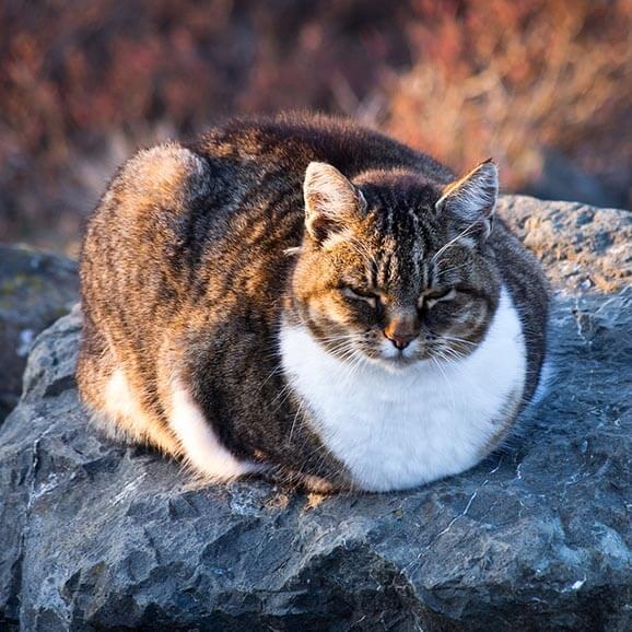 High Fiber Diet Cats